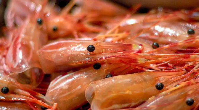 Private Equity Giant KKR Bets on Growing Aquaculture Industry with China Fish Feed Investment
