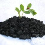 Cool Planet Raises $9m to Commercialize Co2 Sequestering Biocarbon Soil Input