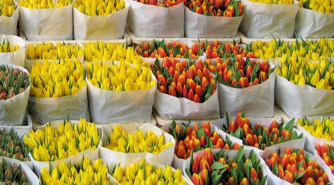 Amsterdam-_Floating_Tulip_Shop
