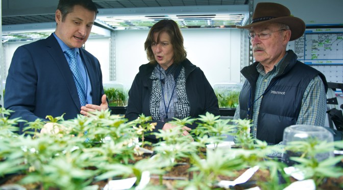 Cannabis Goes Global as Privateer Eyes End of Prohibition