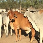 Australian Farmland Investment Shows No Signs of Slowing with QIC's A$400m NAPCo Purchase