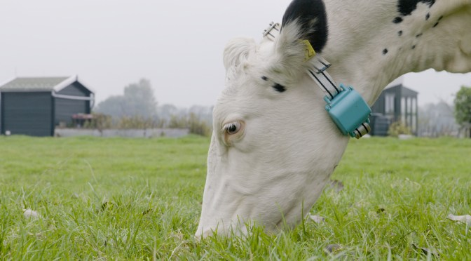 Connecterra Raises $1.8m for Intelligent Animal Health Monitoring Technology