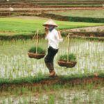 Vietnamese IoT Agtech Startup MimosaTEK to Showcase at Seedstars World