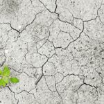 Five Reasons to Invest in Land Degradation Neutrality