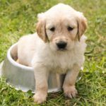 One Man's Treasure: How Dockside Pet Products is Repurposing Unsold Food