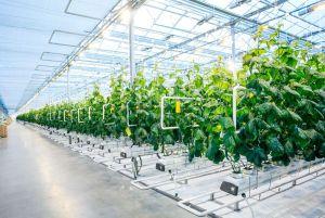 indoor farm funding