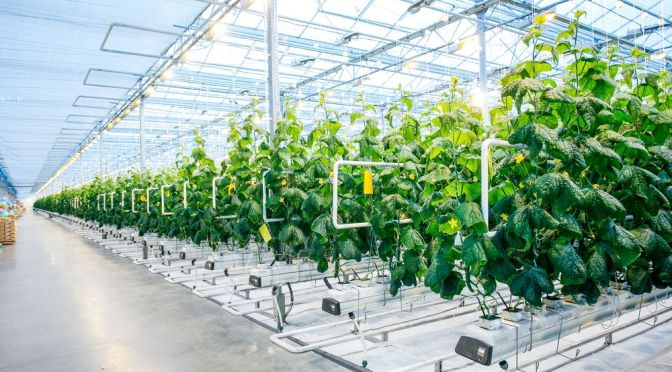 Seven Ways to Get Funding for Your Indoor Farm