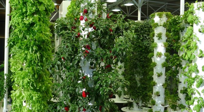 10 Online Platforms Helping Future Indoor Farmers
