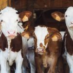 Andreessen Horowitz Leads $4m Seed Round for Livestock Genetics Startup TL Biolabs
