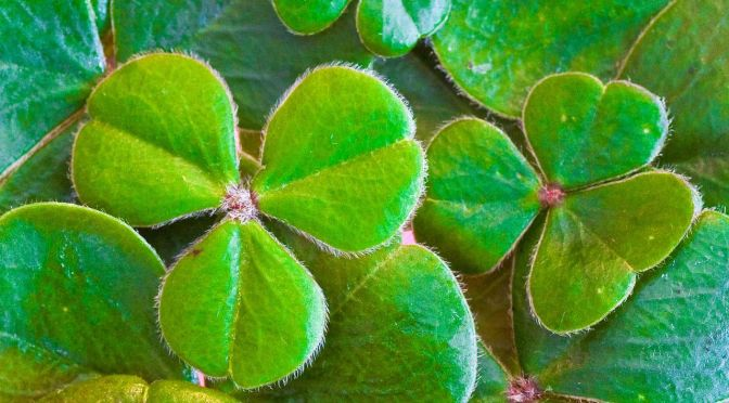 10 Agritech Startups from Ireland Making St Paddy Proud