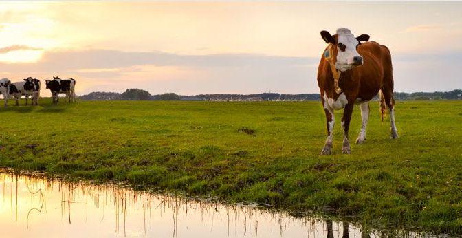 Agtech Funding Sheet: Agersens Raises $2m for Fenceless Farming Tech, Ecoation's Disease Detection Tool Raises $1m, more
