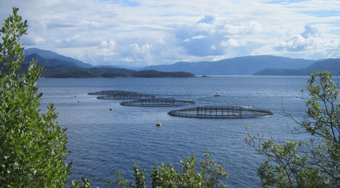 Aquaculture's $100bn Feed Challenge Presents Big Opportunity for Entrepreneurs