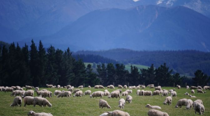 Farming2020 Marks a Major Shift for the New Zealand Agtech Ecosystem