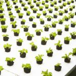 Bowery Farming Raises $20m Series A to Hire and Expand