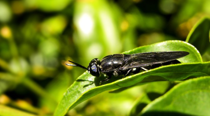 Protix Raises $50m in Largest Insect Farming Investment on Record