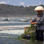 Report: Algae Market to Reach $45bn by 2023