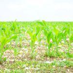 Disruptive Crop Insurance Startup Crop Pro Raises $8m from Agtech VCs