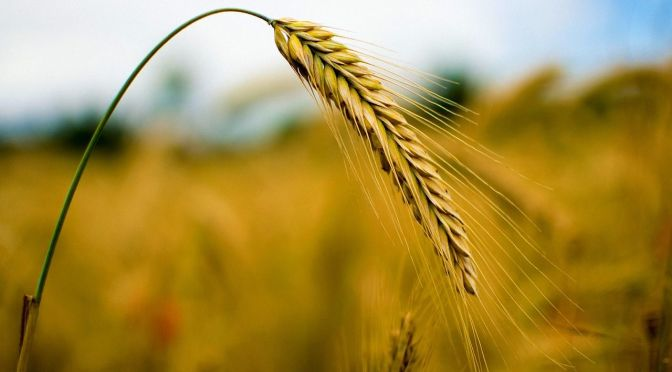 Why Farmers Should Have a Hedging Strategy