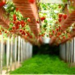 What is AgriFood Tech?