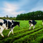 Ireland Strategic Investment Fund Invests €40m in Agtech with Finistere