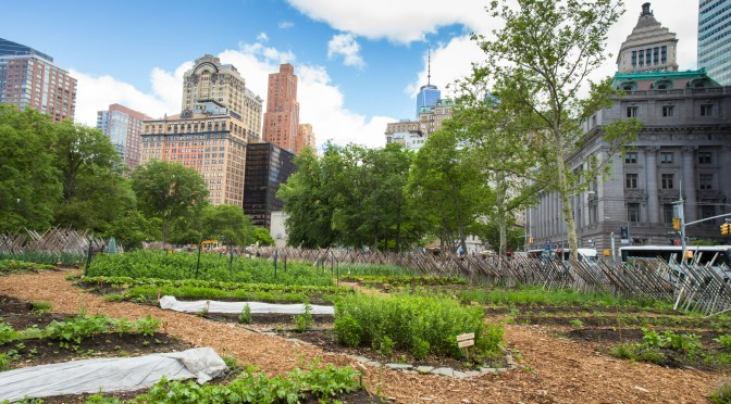 How Can New York Meet the Challenges of Urban Agriculture?