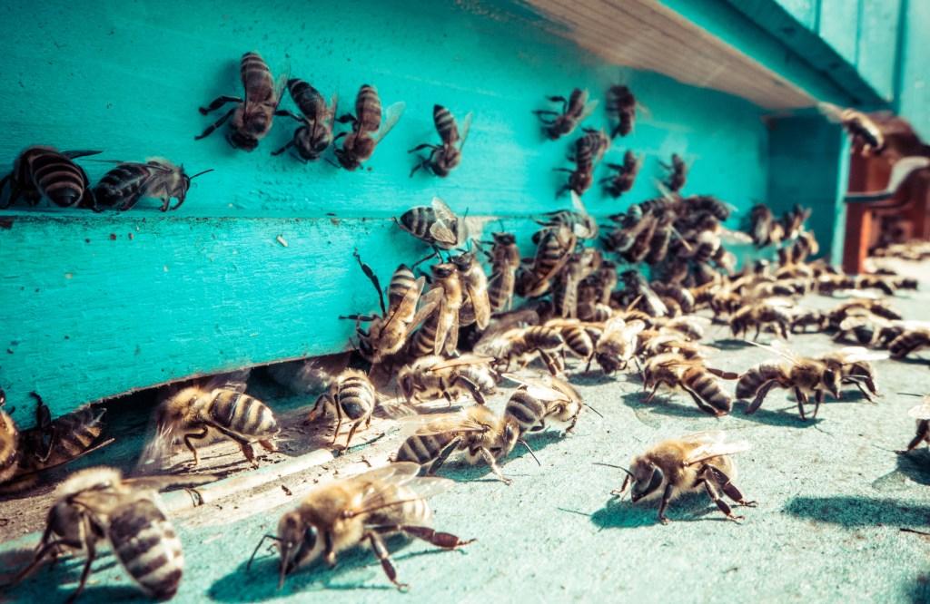 bee hive loss