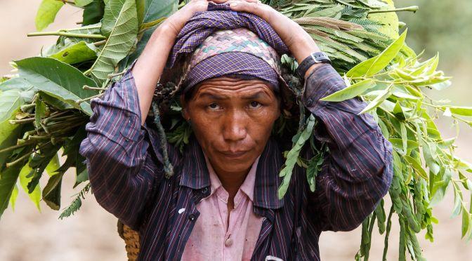 smallholder farms