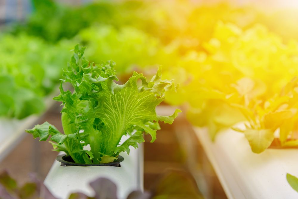 invest in leafy-green indoor agriculture