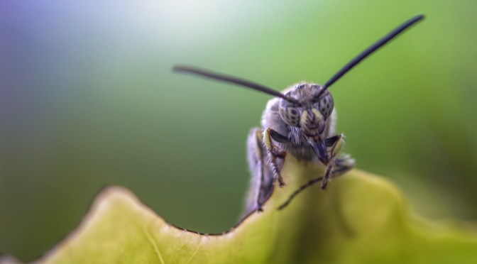 Who are the Leading Insect Farming Startups? - AgFunderNews