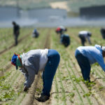 What Happened With Farm Labor Visas This Year (And What Didn't)