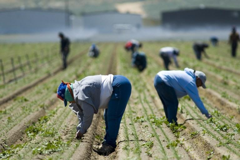 Farm Labor Policy