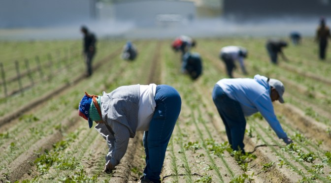 Farm Labor Policy