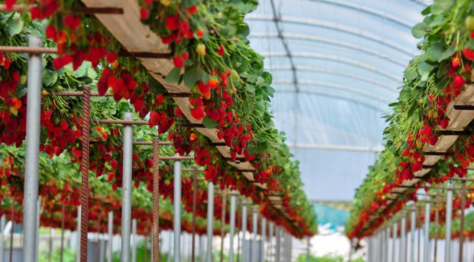 Tortuga AgTech Raises $2.4m Seed Round for Indoor Ag Robotics