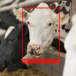 Cargill Backs Livestock Vision Tech Cainthus