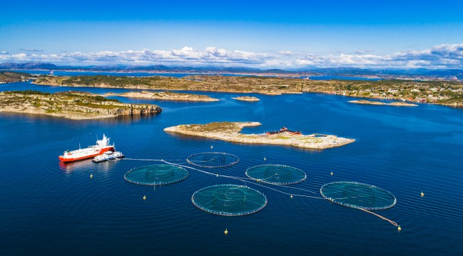 Aquaculture Startup Ecosystem Takes a Step Forward with New Accelerator