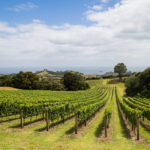 Global Thinking Sets Up New Zealand Agtech Startups for Outsized Impact