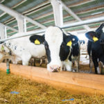 Nine Dairy Farm Tech Startups Seeking to Bolster a Troubled Industry