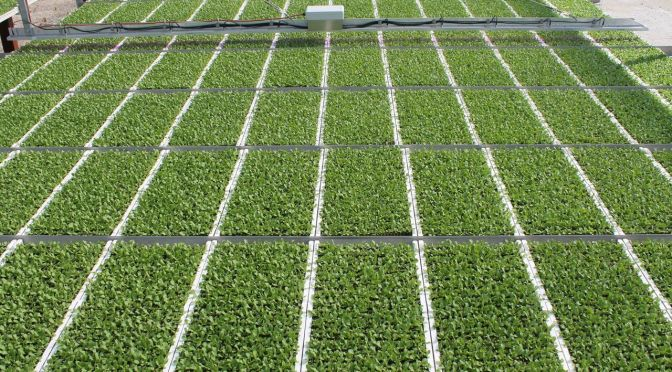 BioLumic Raises $5m Series A to Commercialize UV-based Crop Enhancement Tech