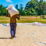 Wefarm Raises $5m from Skype, WordPress Founders for Smallholder Farmer Network