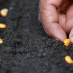 Micropep Raises €4m Series A for miRNA-based Crop Enhancement