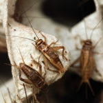Ag Industry Brief: Insect M&A, Kraft Heinz Launches Incubator, Startup Makes Egg Protein from Fungi, more