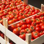 S2G Leads $3m Series A for Food Waste Tech Hazel Technologies