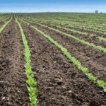 Understory's Move into Agriculture Comes into Focus with Monsanto Partnership