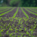 VC-Backed Crop Insurance Startup Cancels Nearly 200 Policies in First Growing Season