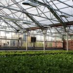 Gotham Greens Raises $29m Series C for Urban Greenhouses