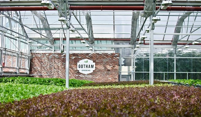 BREAKING: Gotham Greens Raises $29m Series C for Urban Greenhouses
