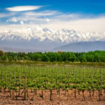 The Yield Lab Launches LatAm Accelerator, Invests in 3 Agtech Startups