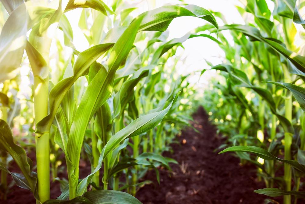 agfundernews.com - Sponsored Post - Cultivating Agtech Leadership for Established Row Crop Leaders