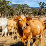 AgriWebb Raises A$14m Series A, Acquires FarmWizard from Wheatsheaf Group for Livestock Tech