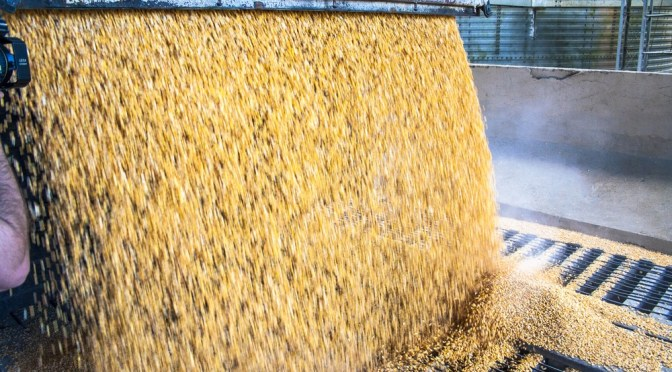 TeleSense Closes $6.5m Series A for Grain Monitoring IoT Platform to Reduce Spoilage
